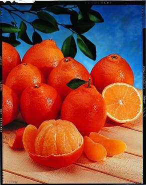 Honeybell Oranges - 2 Shipments